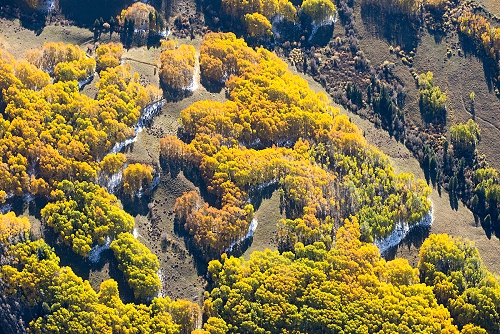 Groves (TX) United States  City pictures : ... Aerial Photograph of Aspen Groves, Gunnison County, Colorado 17941